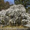 大原野神社(京春日)