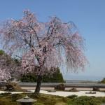 正法寺(西山のお大師さま・石の寺)